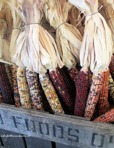 Farm stand Indian corn (Garden of Len & Barb Rosen)