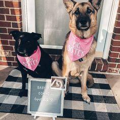Pregnancy Announcement, Big Sister Dog Bandana, Pregnancy Announcement Dog Bandana, Baby Announcement, Pregnancy Announcement with Dog, Tails Up Pup, Tailsuppup #pregnancyannouncement #baby #photoideas #dogbandana