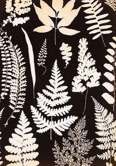 plant life photogram by watersedgechris