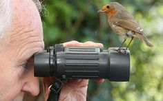 Somerset Wildlife enthusiast and photographer Richard Bolton has bonded with a wild Robin called Robbie at his home in Stogumber near Taunton