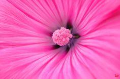 couleur Rose - Google zoeken