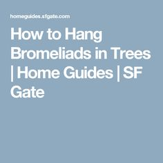 How to Hang Bromeliads in Trees | Home Guides | SF Gate
