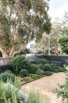 Australian Garden Design, Australian Native Garden, Australian Bush, Outdoor Landscaping, Front Yard Landscaping, Landscaping Ideas, Back Gardens, Outdoor Gardens, Bush Garden