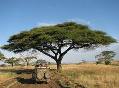 Searching for the Best African Safari Travel? Find a vast selection of tour operators. Comprehensive African Safari tours selection at best price. Bucket List Before I Die, Out Of Africa, African Safari, Adventure Is Out There, Cairo, Oh The Places You'll Go, Photos, World, Travel