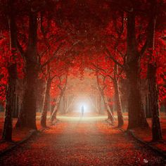 As you start to walk out on the way, the way appears. ~Rumi {Image: Ildiko Neer} Gosh I want to go here. Rumi Quotes Friendship, Spiritual Sayings, Spiritual Messages, Rumi Love, Let Me In, Red Tree, Walk Out, Sufi, Beautiful World