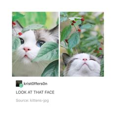 """814 Likes, 5 Comments - huh (@fancy.avocado) on Instagram: """"it looks like its about to do something mischievous . . . #lol #animal #funny #cute #tumblr"""""""