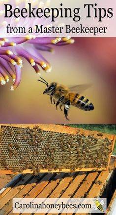 Beekeeping tips and trick for the new beekeeper.  You have so much to learn about being a beekeeper.  Get off to a good start. via @https://www.pinterest.com/carolinahoneyb