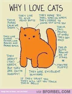 Why I Love Cats…