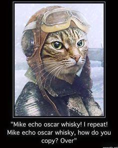 (109) Steampunk Tendencies #funny #steampunkcat #cat https://www.steampunkartifacts.com