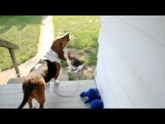 Howling Hound Dogs