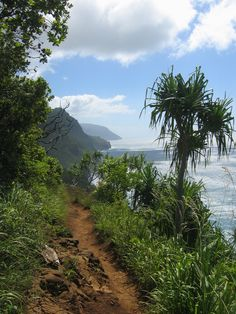 Kalalau Trail above Napili coast, Kauai. I hiked the 11 Mile trail with friends Bob Arnold and Mark Killebrew in October this year!  Absolutely one of the coolest trips of my life. Be prepared for grueling hike and some of the most incredible natural beauty anywhere in the world!