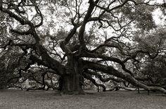 Angel Oak B