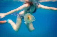 A fish swims trapped inside a transparent jellyfish in this image captured by photographer Tim Samuel in the Pacific Ocean off the coast of Byron Bay on Australia's east coast, taken December 8, 2015 and provided to Reuters June 11, 2016. Tim Samuel Photography/Handout via
