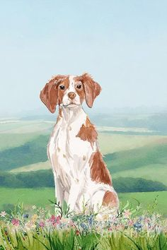 A watercolor painting of a cute Brittany Spaniel sitting in a flower meadow. Watercolor Print, Watercolor Paintings, American Brittany, Cute Dog Drawing, John Edwards, Brittany Spaniel, Cute Dogs And Puppies, Spaniels, Xmas Cards