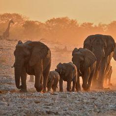 Elephants, Etosha National Park, Namibia BelAfrique - Your Personal Travel Planner www.belafrique.co.za