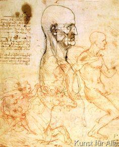 Leonardo da Vinci - Anatomical studies, c.1500-07