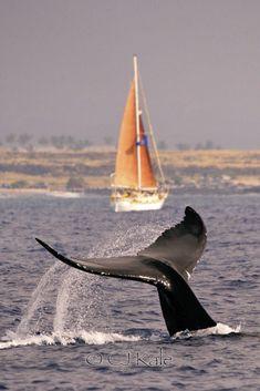 Sail away by Cj Kale on 500px