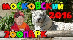 Московский зоопарк 2016, тигры, фламинго, ягуар, гориллы. В зоопарке с М...
