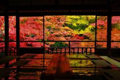 "lifeisverybeautiful: "" Autumn Leaves, Ruriko-in Temple, Kyoto, Japan """