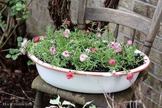 Portulaca or Moss Rose and other flowers that you might have found in your grandma's flower garden