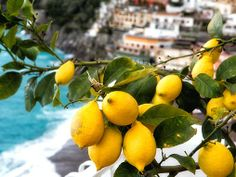 lemon tree!