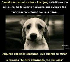 cuando te miran a los ojos   #ExpertoAnimal #MundoAnimal #ReinoAnimal #Animales #Naturaleza #Mascotas #AnimalesdeCompañía #AnimalesGraciosos #AnimalesTiernos
