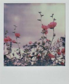 in my lost dream garden