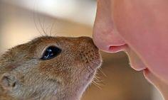 #Neurocientista rebate mito de que faro dos animais é muito superior ao olfato humano - Jornal O Globo: Jornal O Globo Neurocientista…