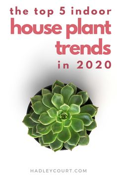 Top 5 Indoor Houseplant Trends of 2020 Tropical House Plants, Living Room Trends, Living Rooms, Fiddle Leaf Fig Tree, Colorful Succulents, House Plant Care, Home Libraries, Herbs Indoors, Best Interior Design
