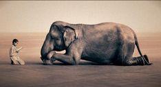 niña elefante - Buscar con Google