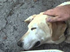 VIDEO: I Was Confused When He Poured Vinegar In His Dog's Ear, But Reason Why? BRILLIANT! | American Overlook