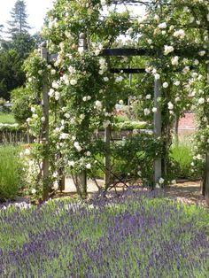 janetmillslove:Blenheim Palace lave moment love