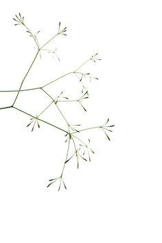 aniseroot | STILL (mary jo hoffman)