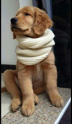 Estou pronto para o inverno ! E ainda muito estiliso!
