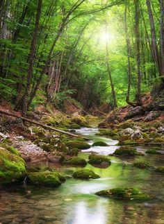Ein Fluss wie ein Waldweg