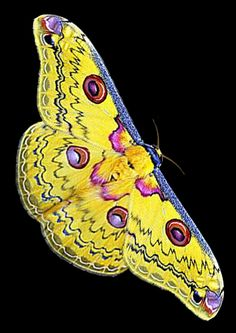 Beautiful Bugs, Beautiful Butterflies, Beautiful Moon, Amazing Nature, Glass Butterfly, Butterfly Wings, Caterpillar Insect, Garden Angels, Butterfly Pictures