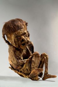 chancay-child-mummy mummy of a child of the Chancay culture. The child was 4 to 6 years old, and it was dated to around 1334 AD. It has fine light brown hair.