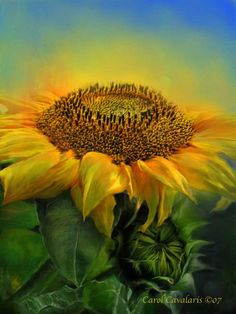 Sunflower  Within your  Golden petals  You hold all  The power.    Prose by Carol Cavalaris ©07