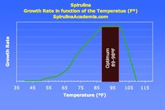 The temperature will directly influence the growth speed of your spirulina. And in does so pretty drastically, the optimum temperature to grow spirulina is Spirulina, Grow Your Own, Seaweed