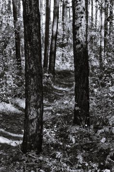 bwstock.photography  //  #forest Black White Photos, Black And White, Free Black, Nature, Plants, Photography, Color, Black White, Fotografia