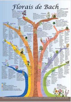 poster cartaz florais de bach - árvore 7 grupos frete grátis