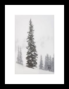 Original Art - Mountain Spruce III - by Terri Heinrichs - Daily Paintworks or Etsy - $125