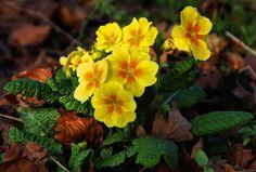 flower - Full HD Wallpaper, Photo