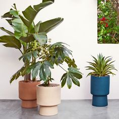 Shop pedestal from west elm. Find a wide selection of furniture and decor options that will suit your tastes, including a variety of pedestal. Modern Planters, Large Planters, Wood Planters, Outdoor Planters, Indoor Outdoor Rugs, Ceramic Planters, Indoor Plants, Planter Pots, Plants On Balcony