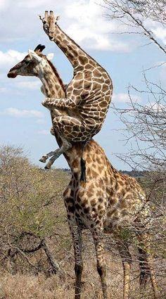 高い高ーい。 on Twitpic もっと見る