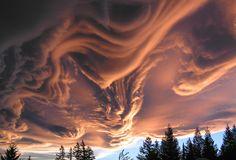 nubbsgalore:  known informally as asperatus clouds.