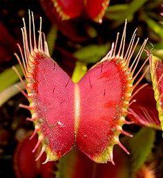 11 Best Meat Eating Plants Images Plants Carnivorous Plants