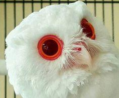フクロウは目が大きいので大きな宝石のようだ。