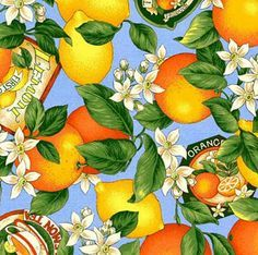 Fruit Pattern Fabric Citrus fruits by vip cranston