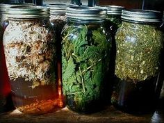 Nourishing Infusions: Nettles, Oatstraw, Red Clover, Comfrey, and Mullein.